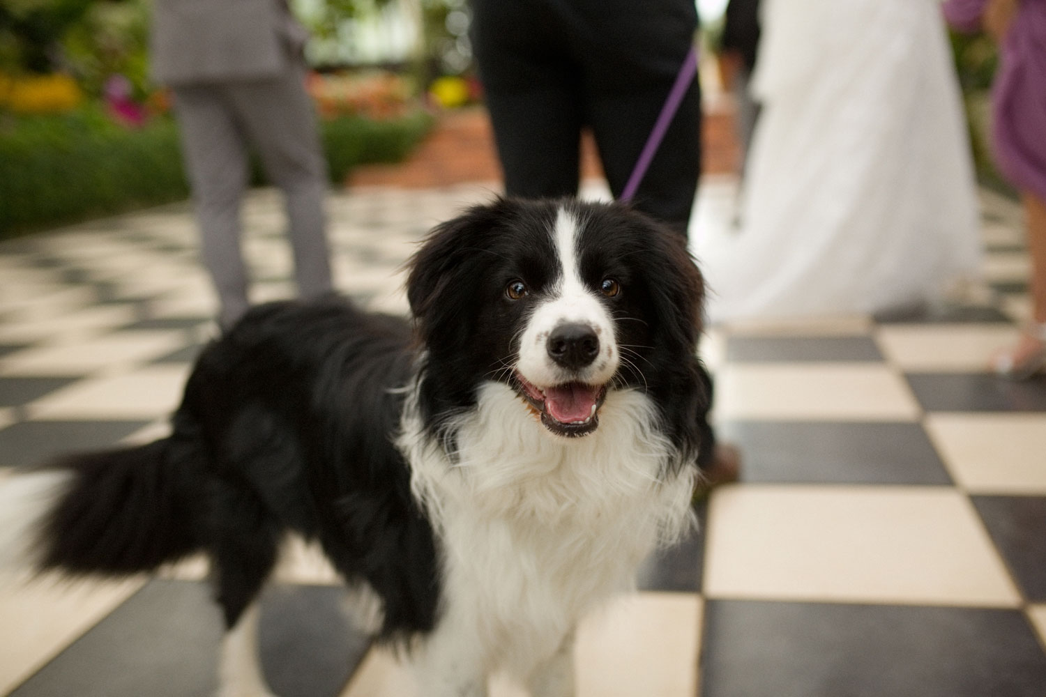 hamilton wedding photo of a dog